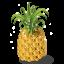 Pineapple-64