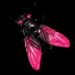 Fly-256