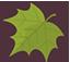 Palmately Leaf
