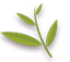 Pinnately Leaf Icon