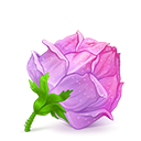 Rose cube icon-128