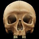 Skull-128