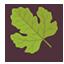 Spring Leaf Icon
