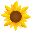 Sunflower-64