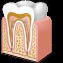 Tooth Anatomy-128